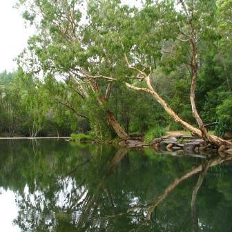 Photo of Stony Creek, surrounded by trees
